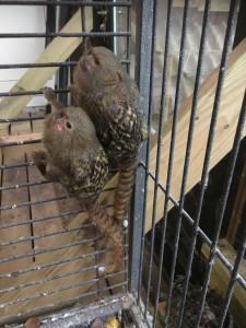 Regnskoven i Monkey World er fyldt med spændende dyr og silkeaber