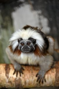 Paryk Tamarin i Monkey World