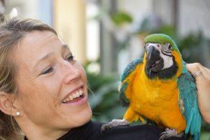 Blå-gul ara papegøje