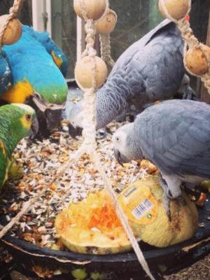 10 kg papegøje blanding