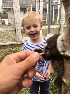 Elliott med silkeabe i Monkey World