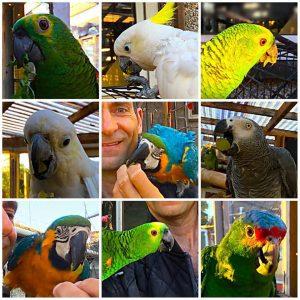 Papegøjer i regnskoven