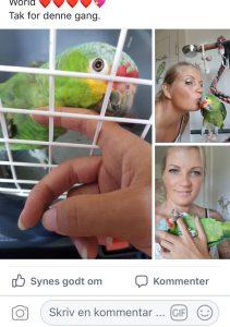 Hillerøds papegøje pasning