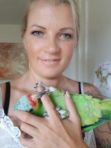 Gulkindet amazone papegøje