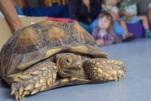 Skildpadder