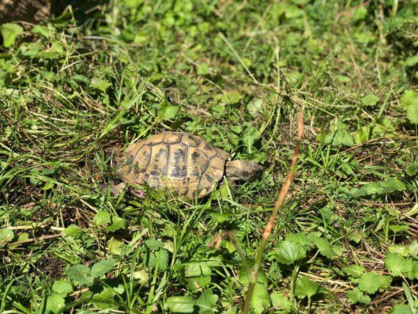 Nordsjællands skildpadde pasning