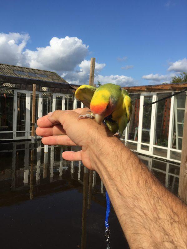Flyvesele til små fugle
