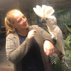 Alba kakadue Hedwig