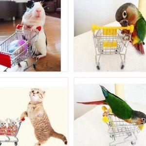 Indkøbsvogn til papegøjer