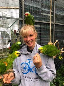 Alle papegøje arter