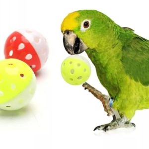 Fugle bold med klokke