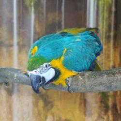 Ny papegøje pension i Hillerød