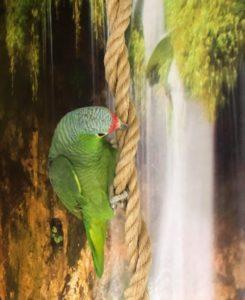 Wasabi på papegøje pension