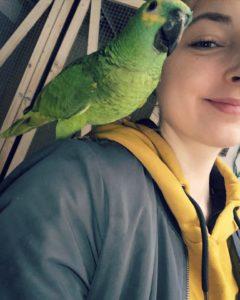 Amazone Papegøje Zazu