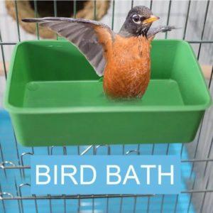 Badekar til små fugle