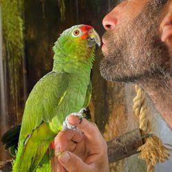 Nulder på papegøje ferie