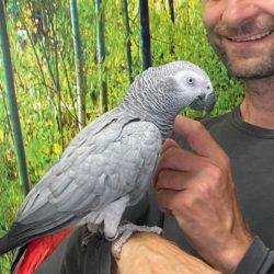 Cookie på papegøje ferie