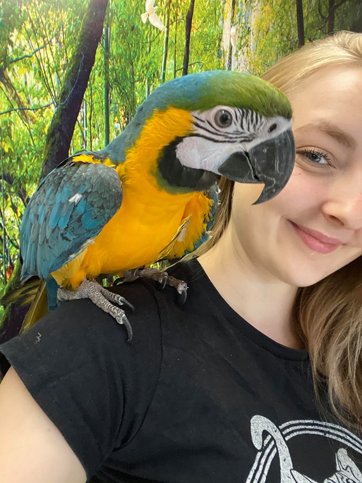 Lilly på papegøje ferie