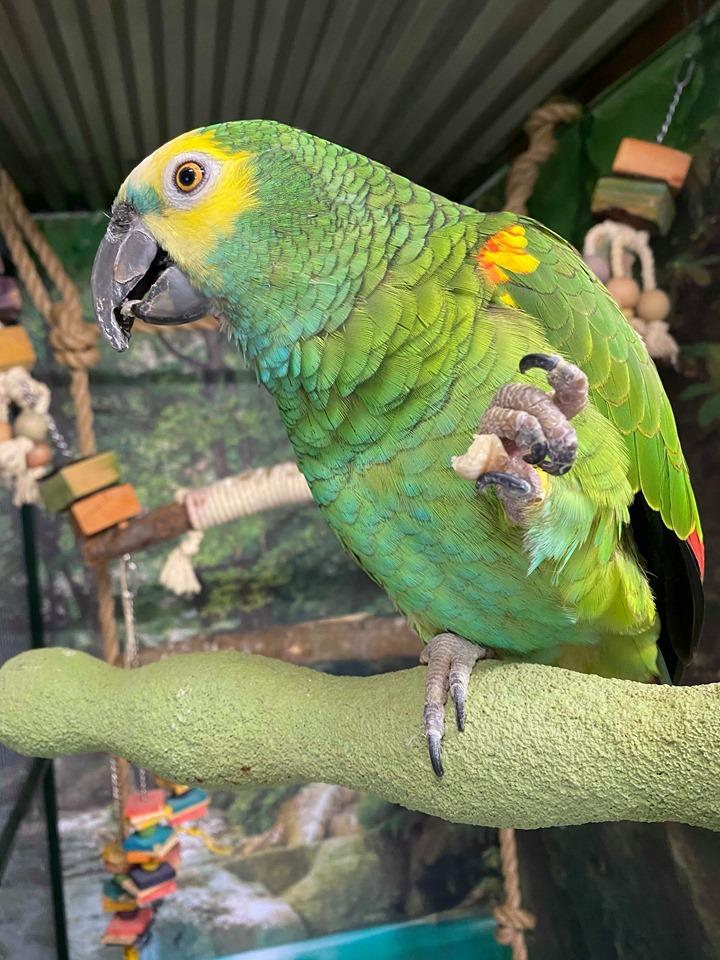 Papegøje Gøje på sommerferie