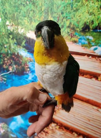 Papegøjen Terkel på sommerferie