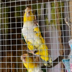 Asta og Lili på papegøje ferie