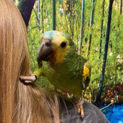 Loui i papegøje pasning
