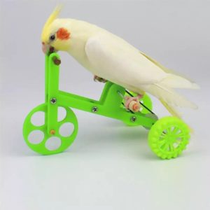 Cykel til fugle