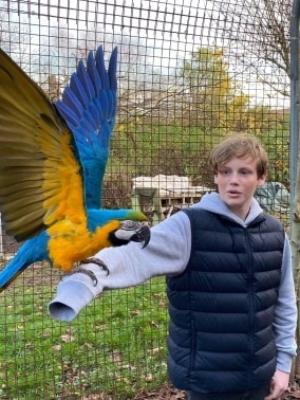 Papegøje flyvning hverdage