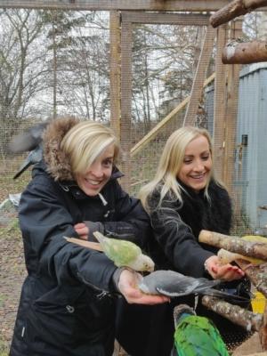 Håndfodring af Nymfeparakitter
