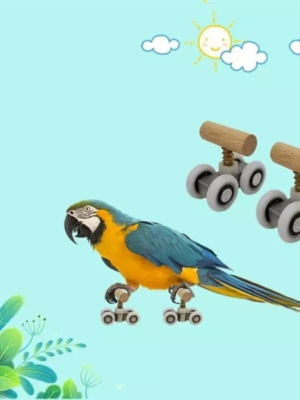 Rulleskøjter til papegøjer