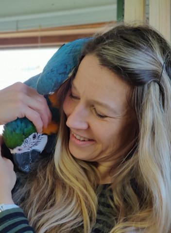 Mango blågul ara