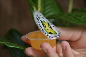 Dragon jelly cups DSC 0842